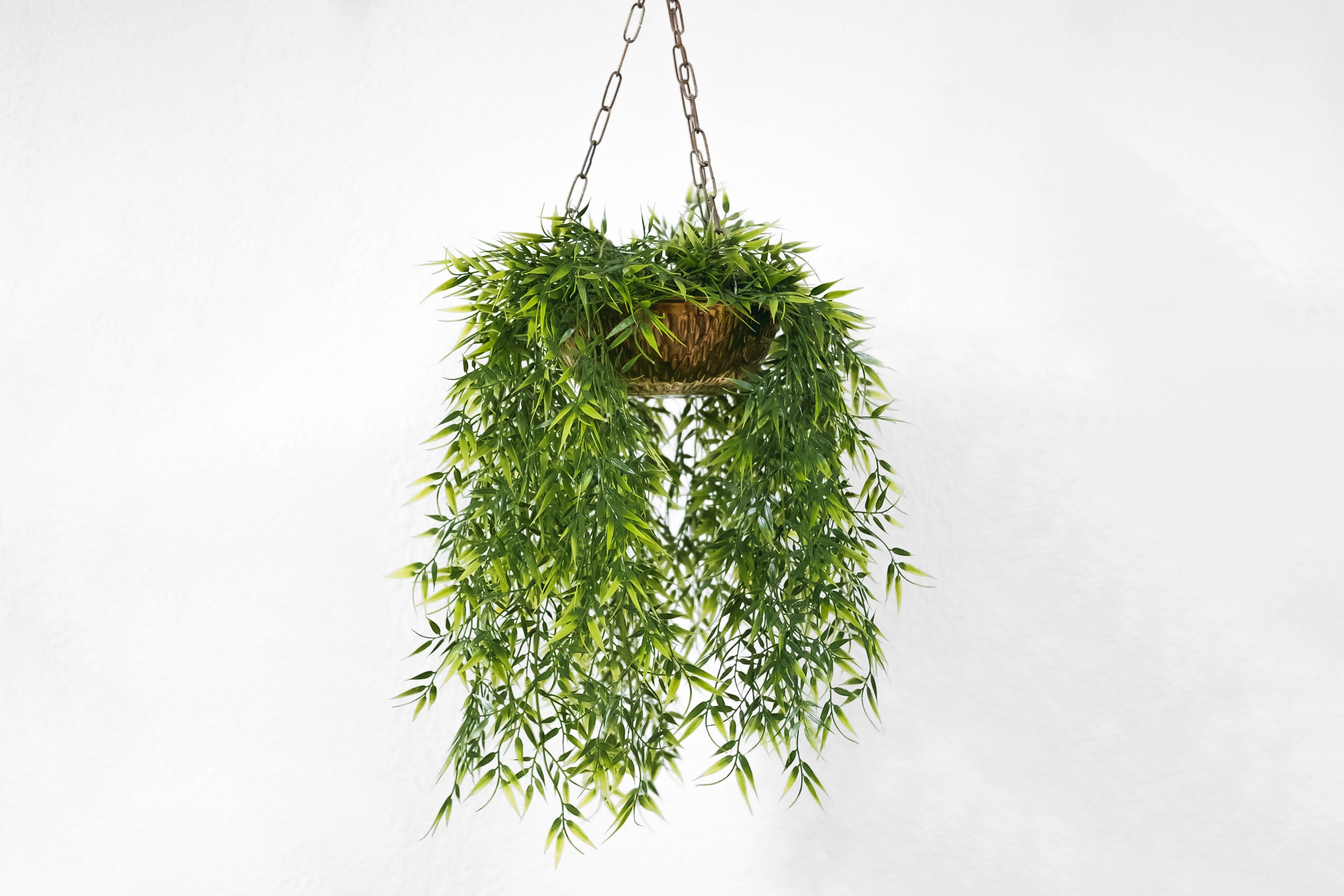 een plant is een van de kantoorhacks